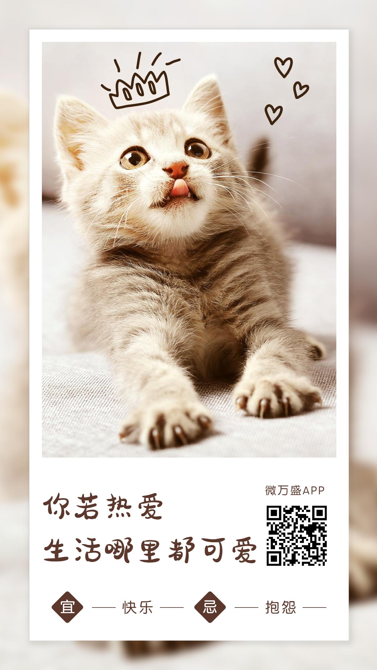 6月你好月初问候日签宠物手机海报.jpg